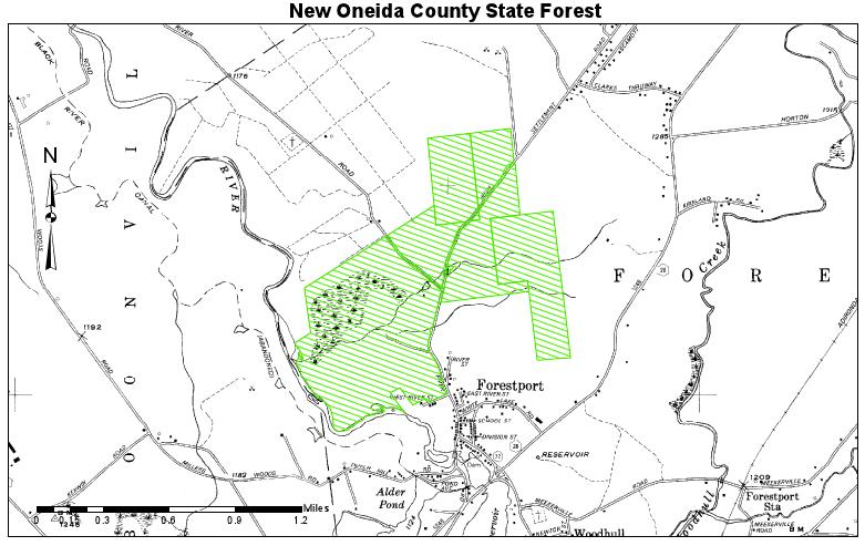 New Oneida County State Forest