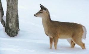 Photo by Art Kirsch, DEC Wildlife Biologist