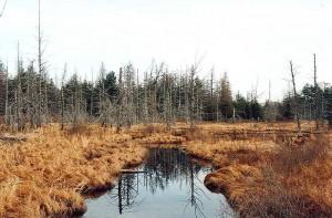 Five Ponds