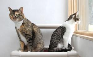 2 cats window