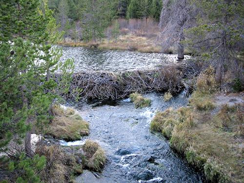 BeaverDam W