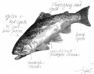 trout_colors