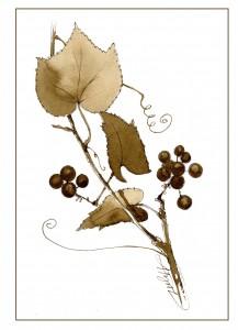 wild grape