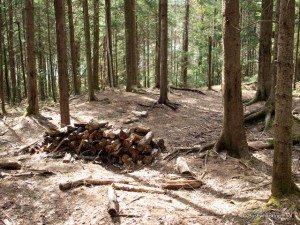 Old hunter campsite near Deer Pond