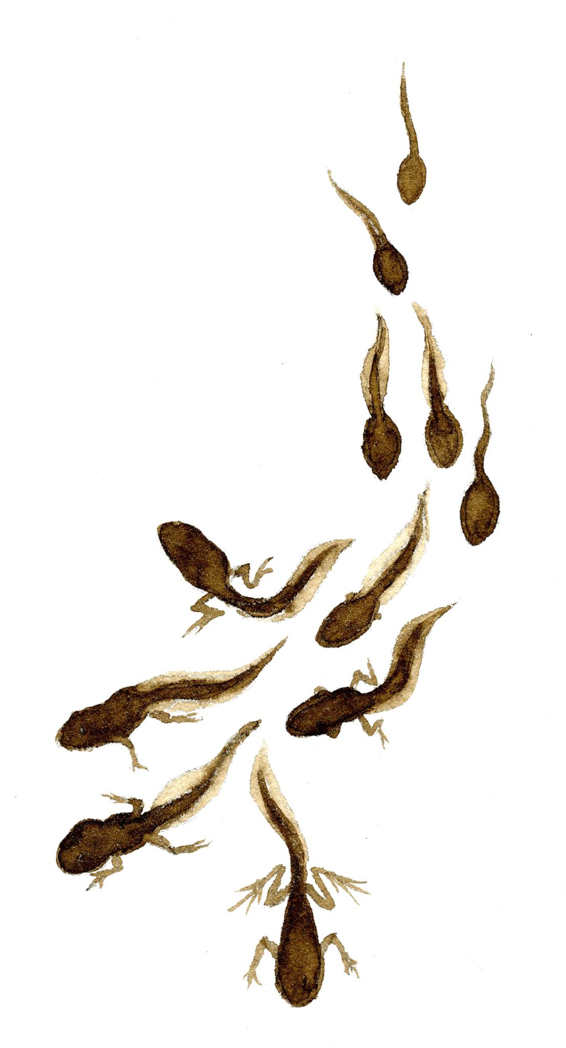 Displaying 18> Images For - Tadpoles...