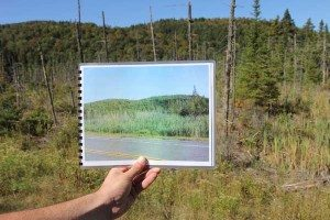 Adirondack-invasive-before-after (Photo Matt Miller-TNC)