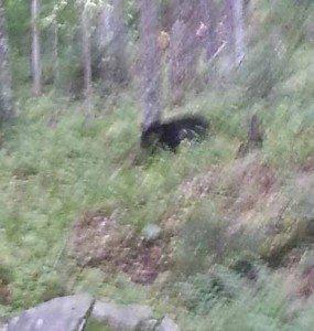 cell-photo-bear2