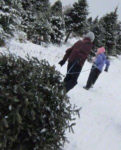 Christmastree_new
