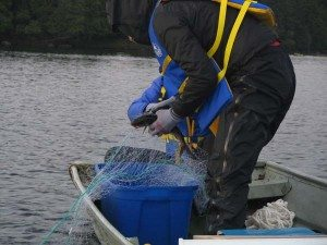 lake-trout-capture follensby pond 2013 (Chris Solomon)