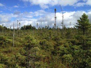 An Adirondack boreal wetland photo by Samouel Beguin