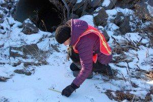 adirondack wildlife tracking_Alissa Rafferty