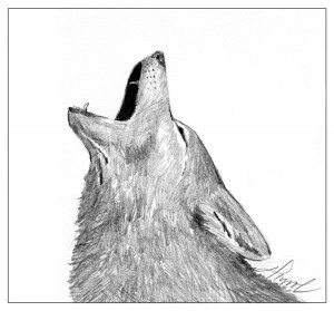coyote_howl