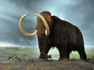 ed_kanze_mammoth