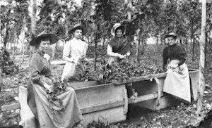 Franklin County hop-pickers c 1900