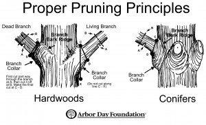 Proper-Tree-Pruning