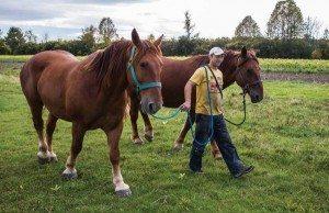 chad_horses-600x389