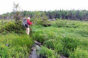 Bushwhacking Fool near South Pond