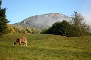 Adirondack Farms