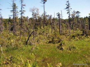 Bog south of Crooked Lake