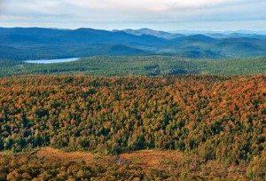 Thousand-Acre Swamp in the southeastern Adirondacks by Carl Heilman II