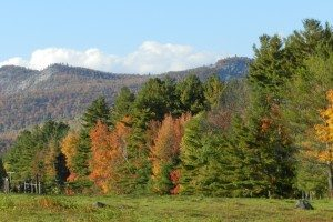 Adirondack Forest and Field