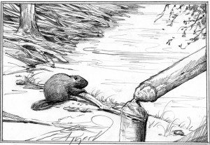 Beaver_castoreum