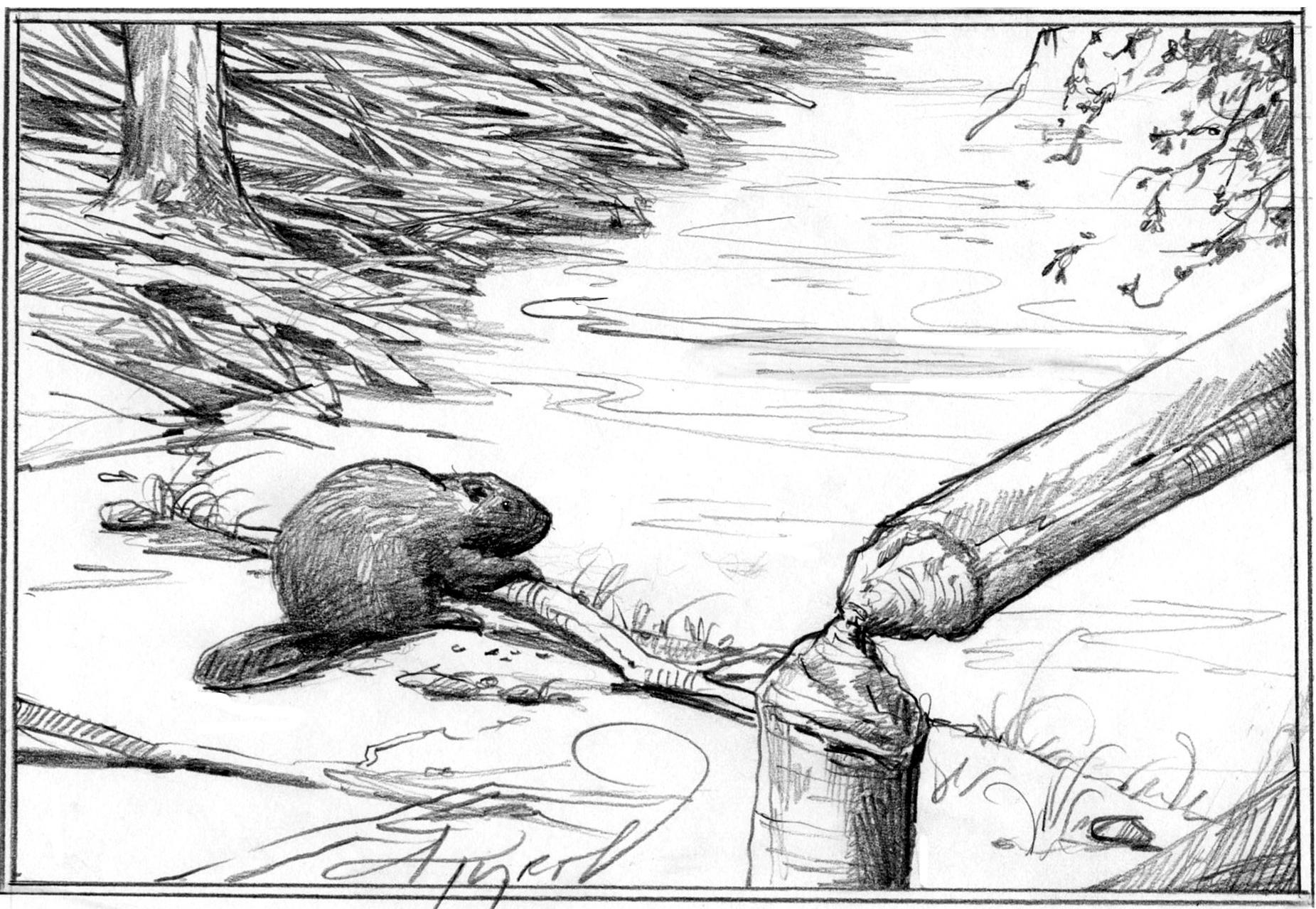 a story about woody and the beaver