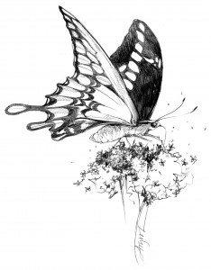 Giant_Swallowtail