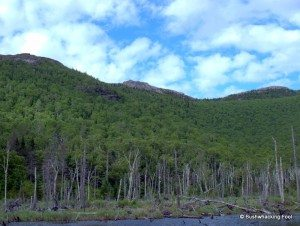 Jay Mountain Range from Merriam Swamp