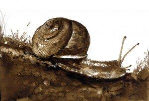 TOS_snail