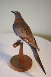 Adirondack Passenger Pigeon