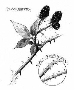 TOS_Berries