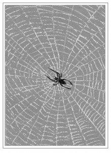 TOS_Web