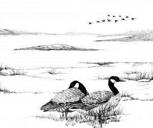 TOS_Bird_migration