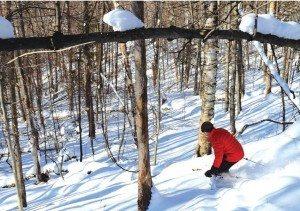 Phil Brown Backcountry Skiing photo by Susan Bibeau