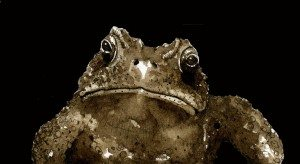 TOS_Toad