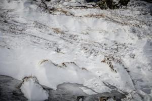 BW - Algonquin Snowshoe Trail Close(1)