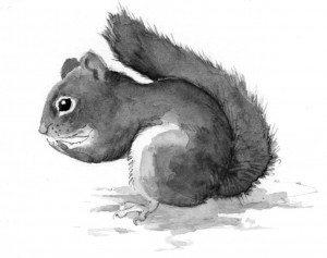TOS_squirrel