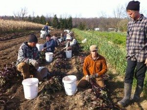 essex-farms-workers-in-dirt1