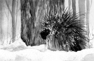 TOS_PorcupineWinter