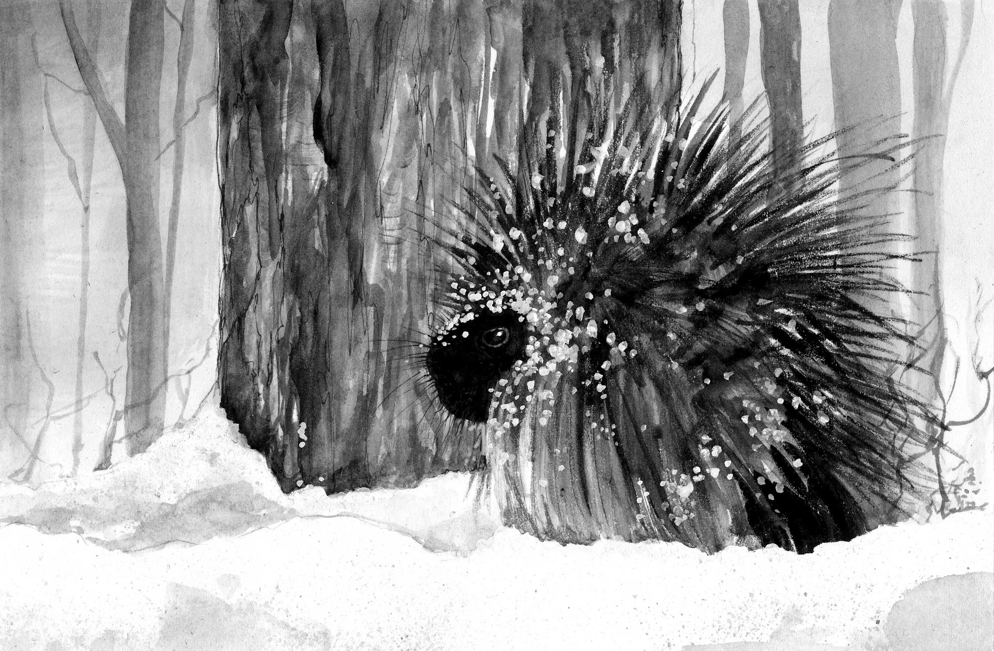 Porcupines: Waddling Through Winter