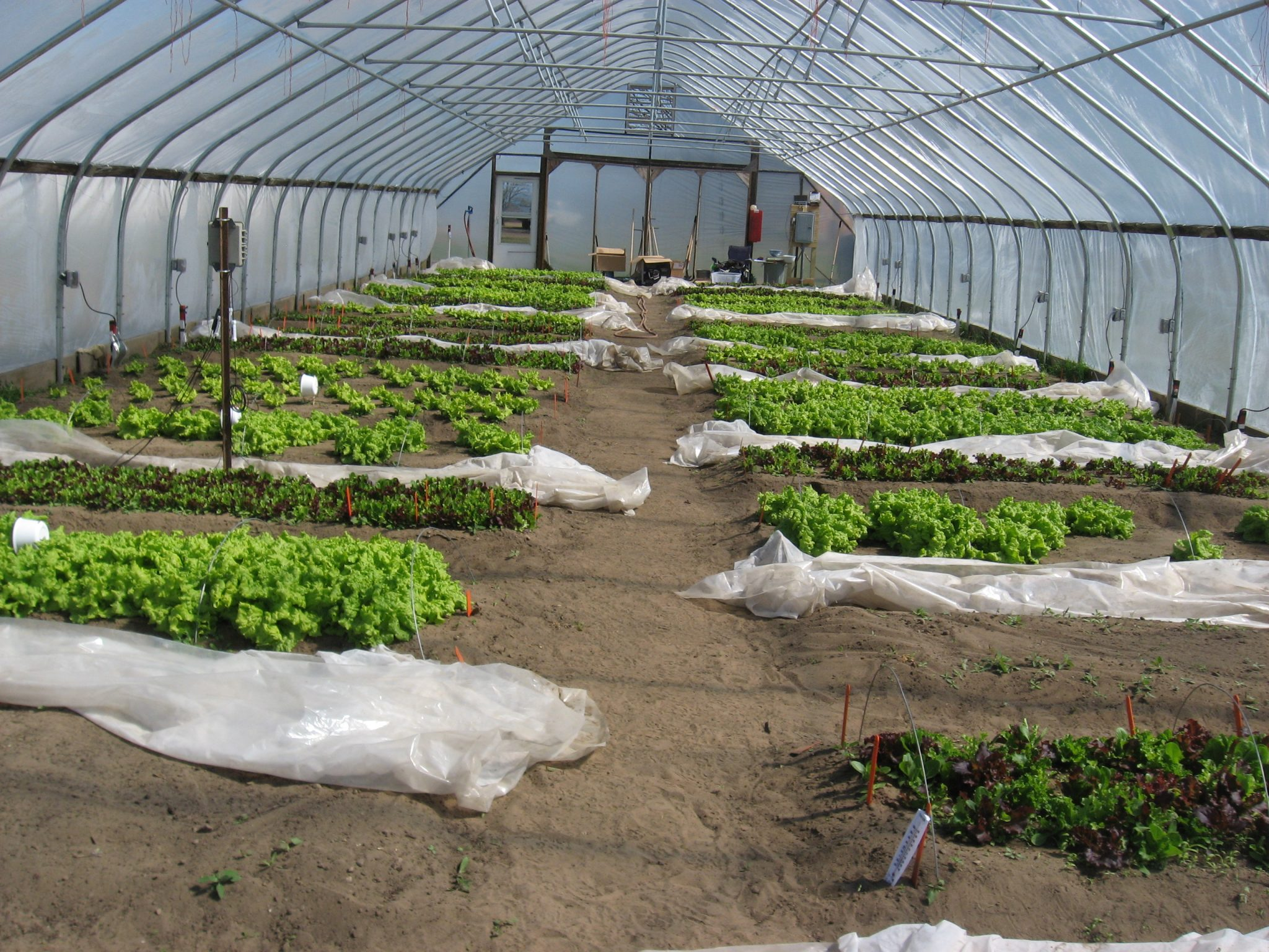 growing local greens in winter the adirondack almanack