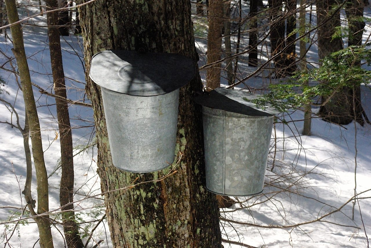Maple Sugar bucket - Glenn Pearsall