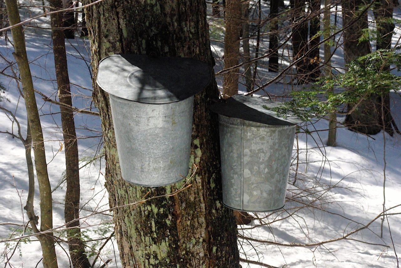 Maple Sugar bucket - Glenn Pearsall