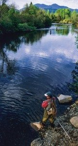 Trout_Ausable-430x800