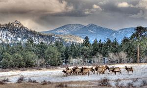 herd of elk in pennsylvania
