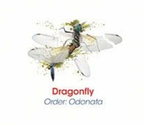 Dragonfly Splatter