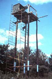 New York's first bald eagle hacking tower