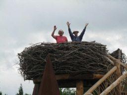 Eagle Nest