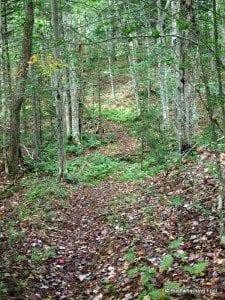 Gray Blazed Trail in Pepperbox Wilderness